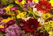 2010-0307-FlowerDisplay-13X19-0613-CWR