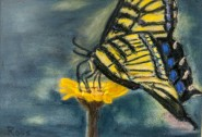 2013-1008-MonarchOnFlower-Pastel-5x7-CWR
